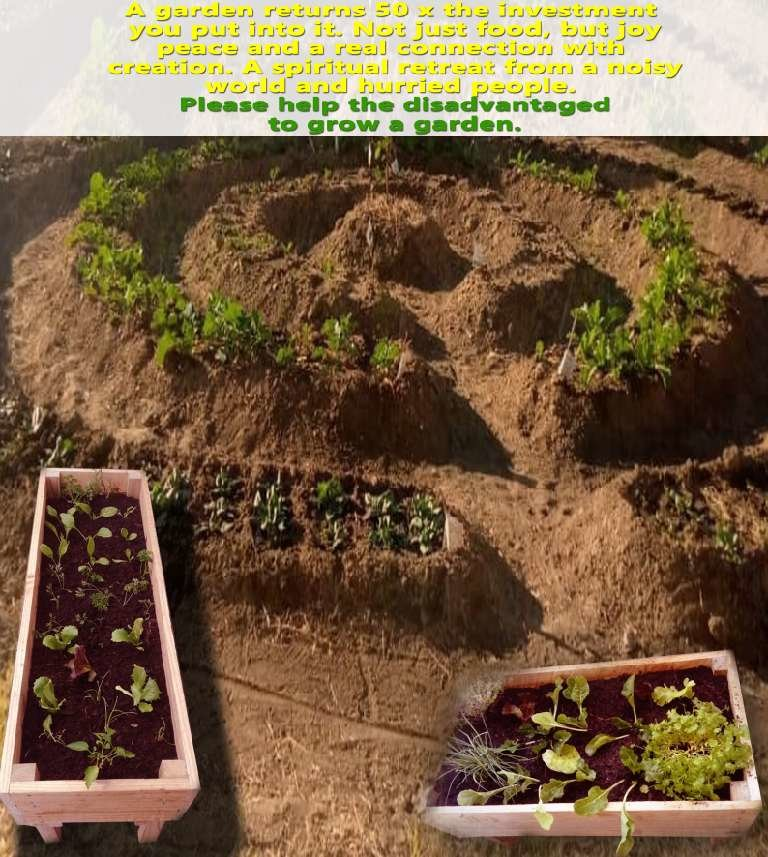Survival gardens for Zim's COVID-19 fight