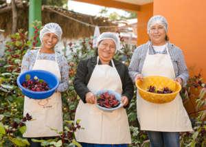Fruit- making cooperatives