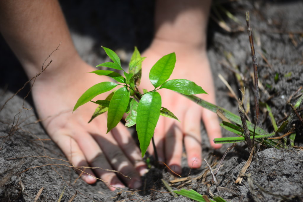 Plant Trees to Save Biomes & Communities in Brazil