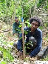 Reforestation work