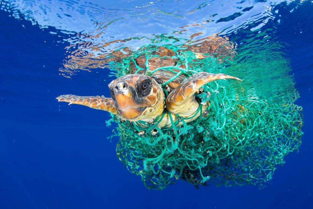 Remove Plastics From Ocean