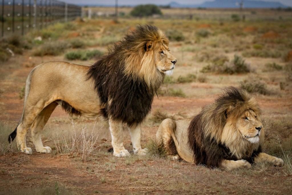 Free roaming environment 4 captive bred predators