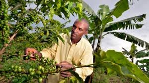 Promote 100 Agric-Chain Jobs for Jobless Nigerian
