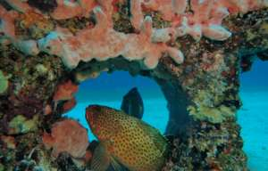 Follow Me- Reef Life Homes for Oceans Homeless