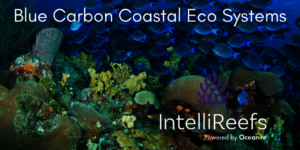See Blog Post on Reef Life Foundation Blue Carbon