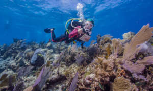 Reef Life Coral Reef Research