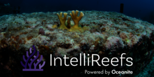 Coral Reeflings on IntelliReefs