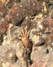Baby Crab, Octopus, Sea Spiders, Mollusks & MORE