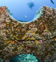 Sponges & Benthic Growth on Intellireefs