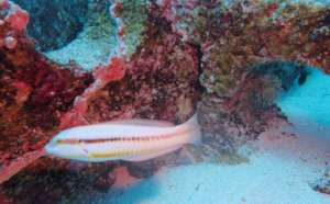 Coral Scientists AND Fish Respect IntelliReefs