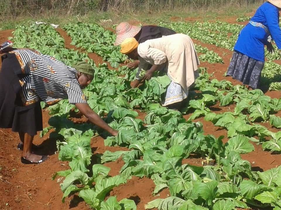 Provide seedlings for 45women in Eswatini villages