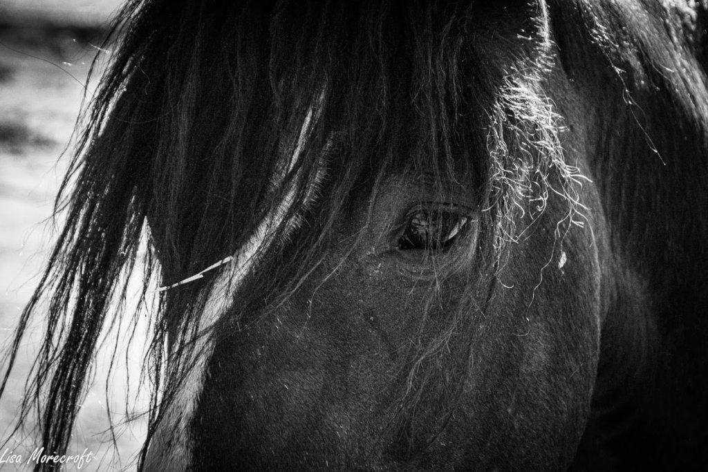 Feed 106 horses