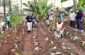 Staff uses school grounds to grow food