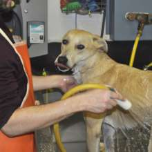 Youth caring for Rose at Project POOCH