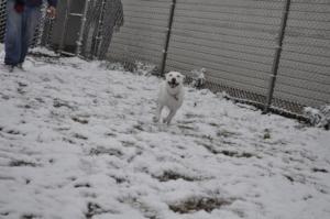 Blanca Enjoying a Snow Day