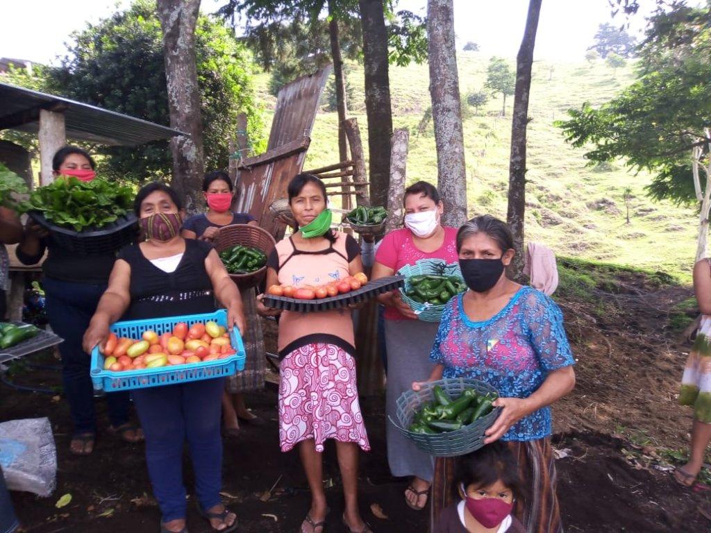 Grow vegetable gardens for 250 Guatemalan families