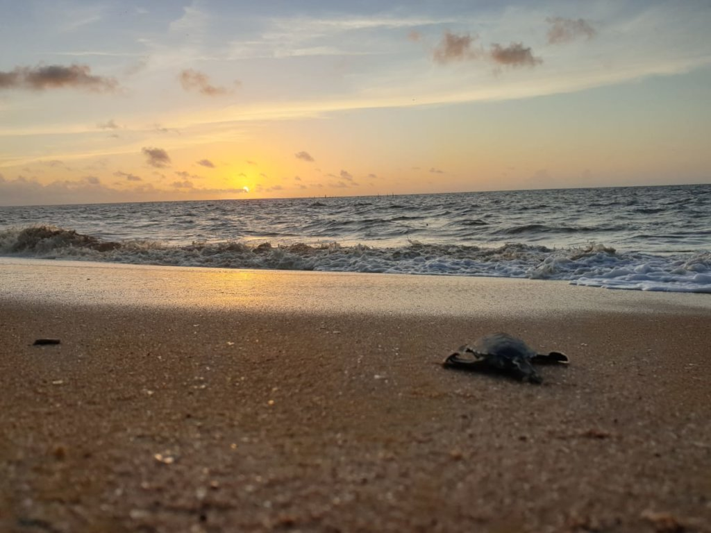 Turtle heroes: Protecting Sea Turtles in Suriname
