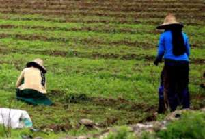 youth women supported by the project,collect crops