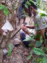 irrigation net during implementation phase