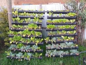 successful vertical farming