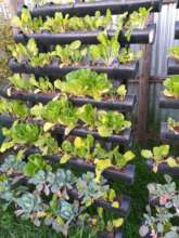 Our Long Term Solution Vertical Farming