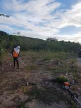 Maintenance of reforested areas (September 2020)