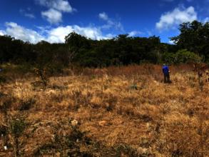Weeding works on PR-333reforestation site
