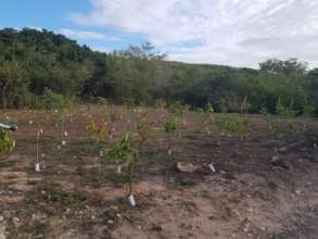 Reforested site