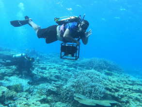 Boost Reef Health and food security in Palau