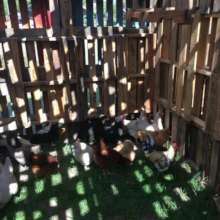 chickens enjoying the Pallet Palace