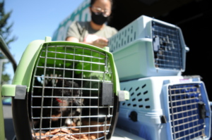 Cats rescued during the Oregon wildfires