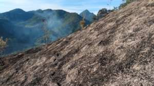 Reforesting our land after a forest fire