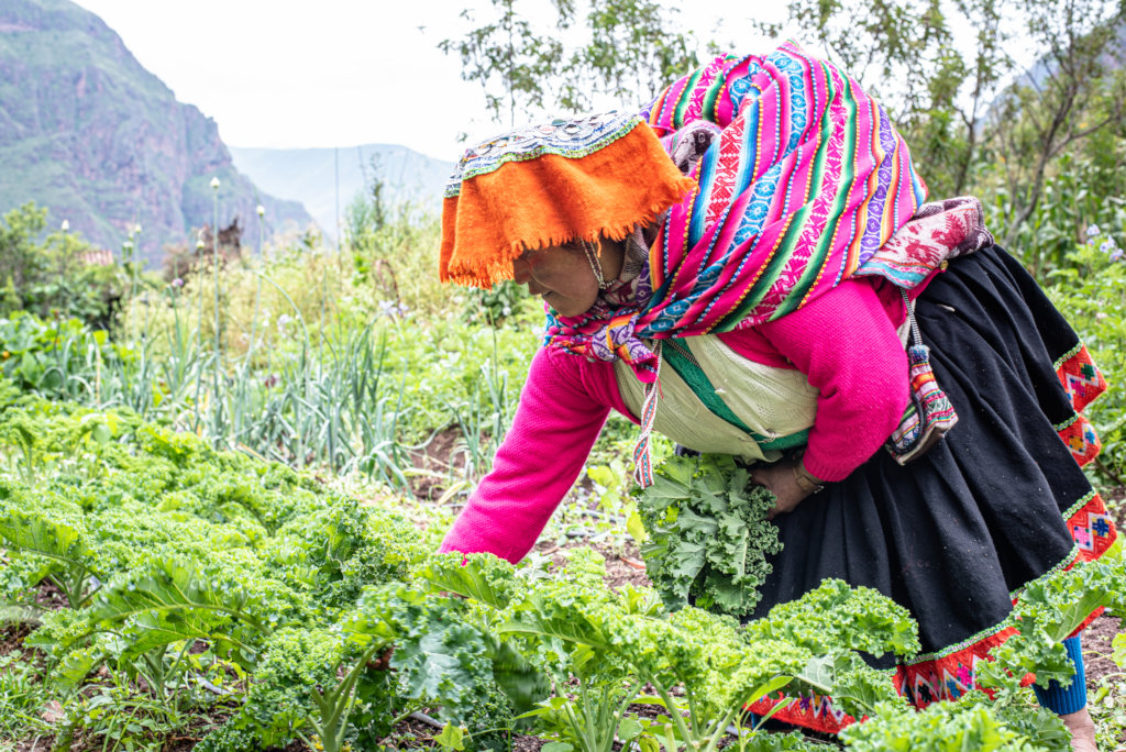 Seeds for Rural Andean Farmers During the Pandemic