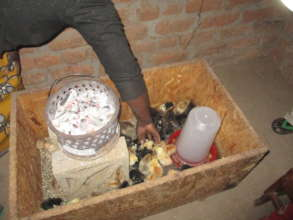 Home based chicken box, with heating