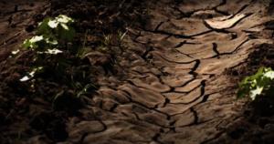 Food security in ruins in Uganda