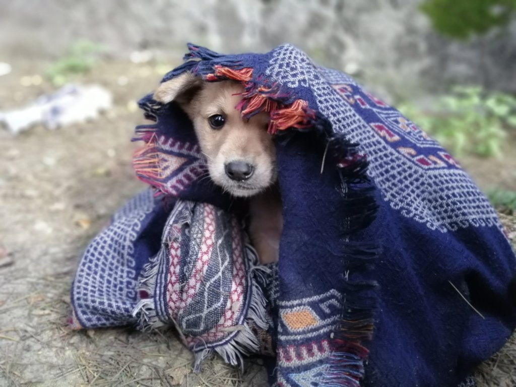 Can you help set up Manali's only animal hospital?