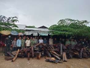Over 3 tonnes of illegal luxury timber seized
