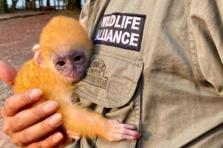 Equip Rangers to Protect Endangered Wildlife