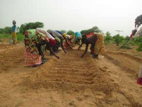 Women planting seeds