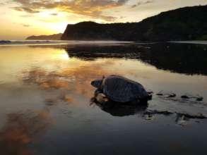 Protect Sea Turtles & Researchers in Costa Rica