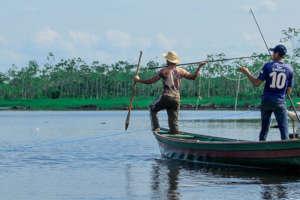 Dwindling Fish Populations