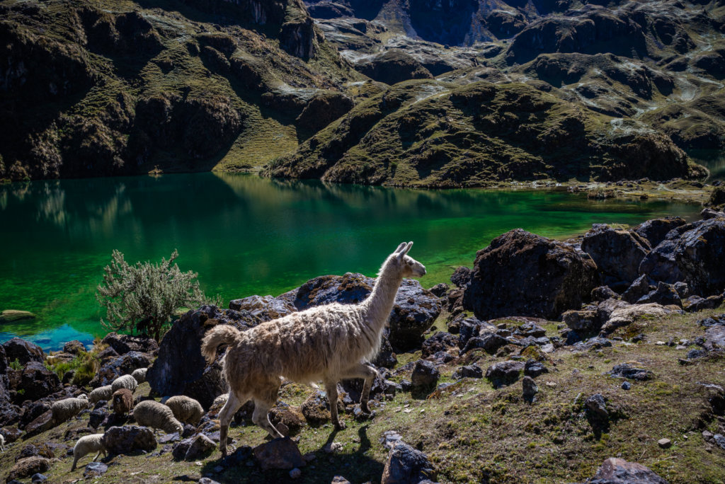 Trekking High-Andes of Cusco on Virtual Reality!