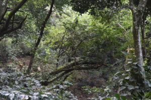 The forest as learning space for food sources