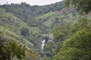 The forest around the Adukkam nursery