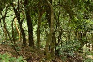 Within the Adukkam nursery garden