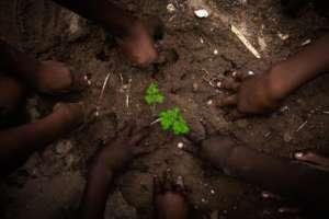 Teaching children to grow their own food!