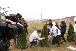 Panting trees during  activities of our org