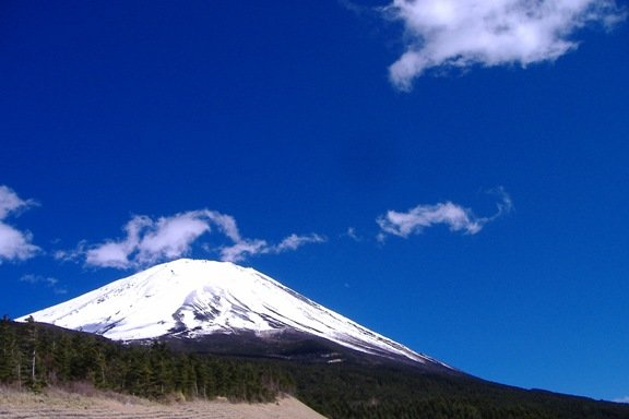 Regenerating 100-Hectare Forest in Mt. Fuji