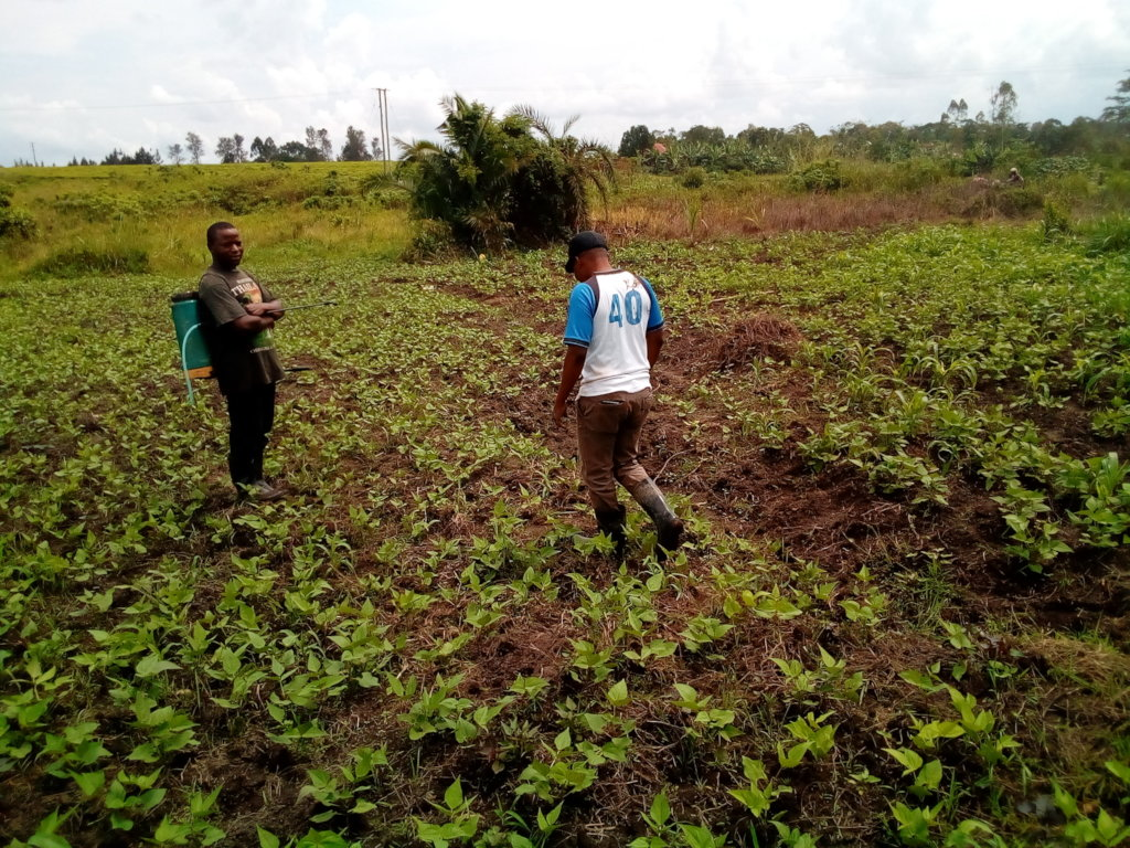 School completion & securing agric-land in Uganda