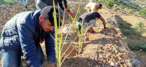 Safeguarding Indigenous Seeds in Southwest Morocco